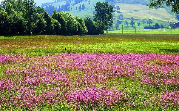 نيوزيلاندا الطبيعة الخلابة