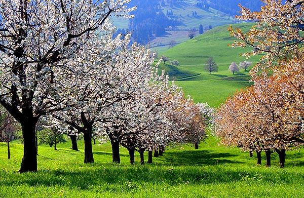 نيوزيلالندا الطبيعه الخلابه Pic11.jpg